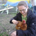 Chickens are Coming to SEEDS!