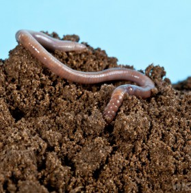 The Dirt on Dirt: Testing Your Soil