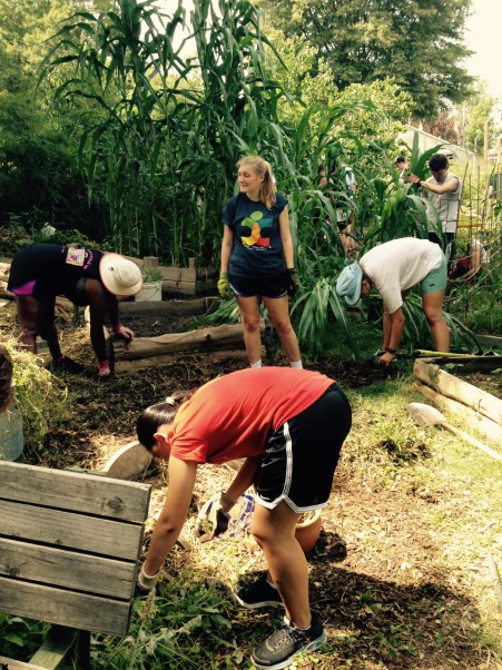 Davidson Scholars volunteer with community gardeners