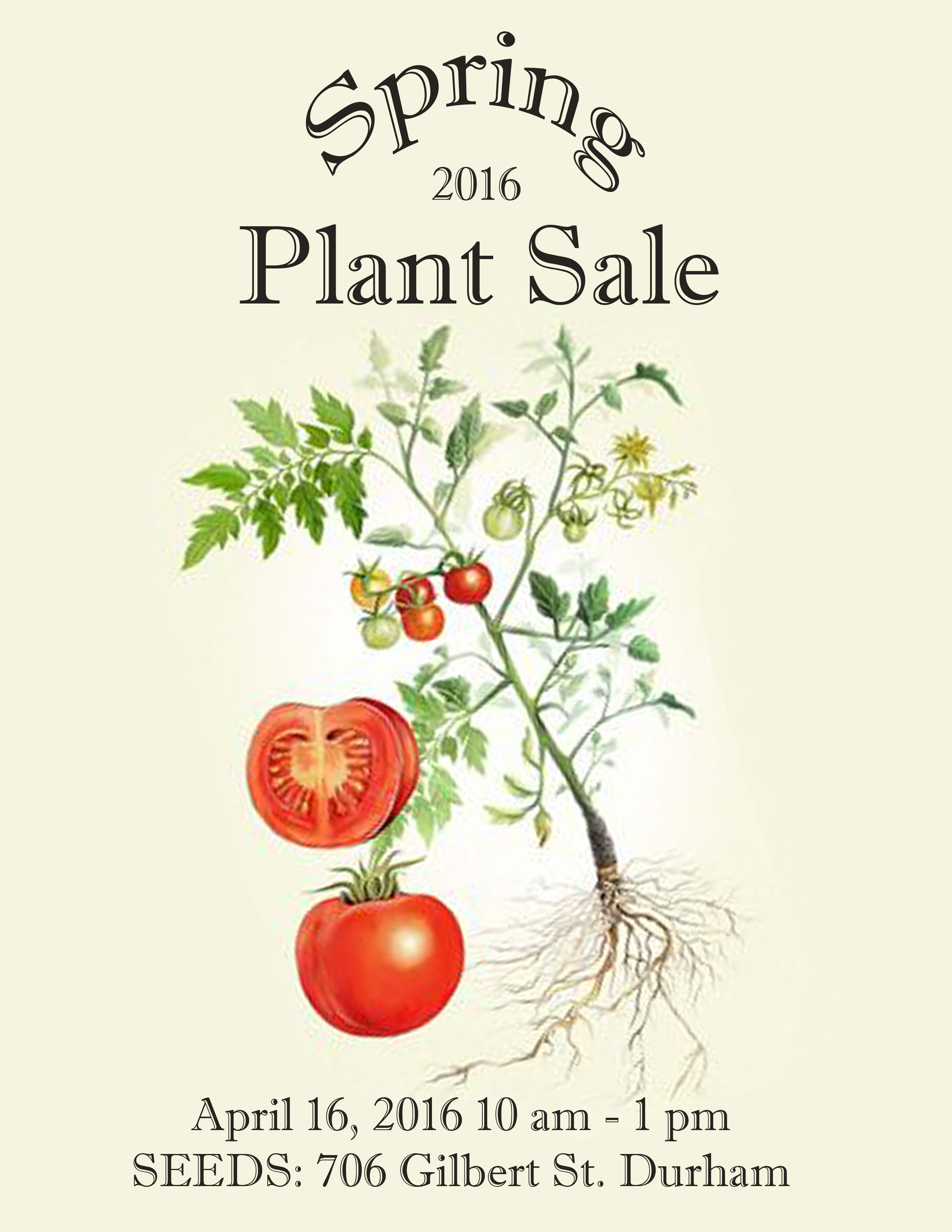 Reinvigorate Your Spring Garden With Seeds Spring Plant