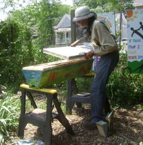 Meet Dave: SEEDS' keeper of the bees