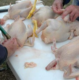 Humane Chicken Processing Workshop, April 29th 9-12