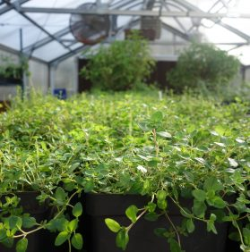 New Year Plant Sale